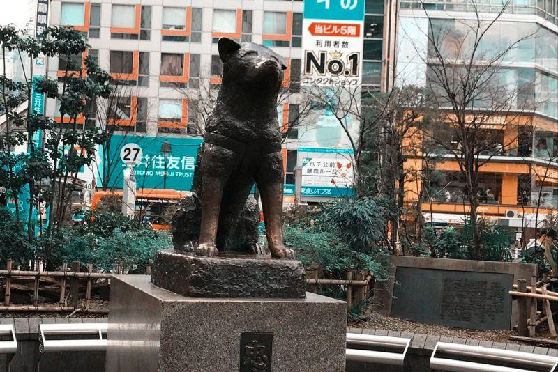 Hachiko Statue, Sehenswürdigkeit Tokio