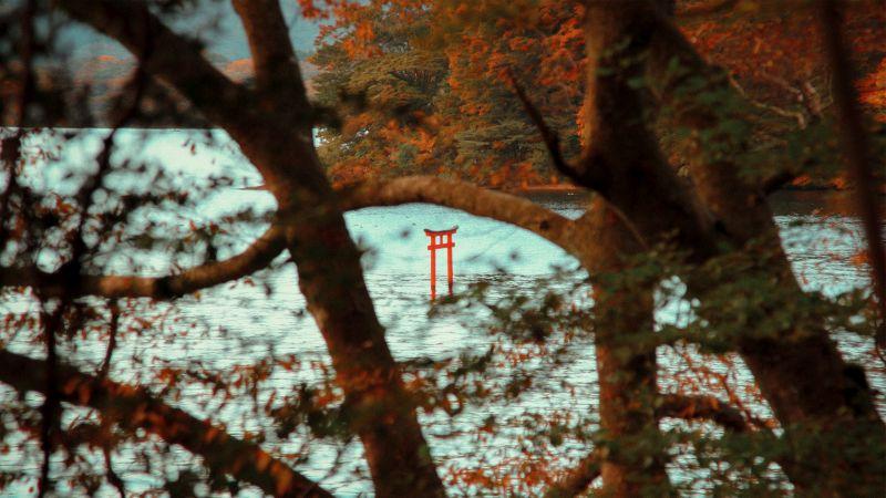 Rotes Torii Tor, Hakone, Japan